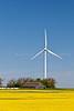 A single windmill, old barn and canola field at an electric windfarm near St. Leon, Manitoba, Canada.