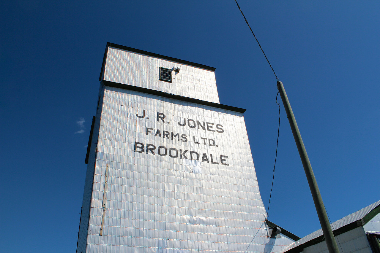 Brookdale - looking up