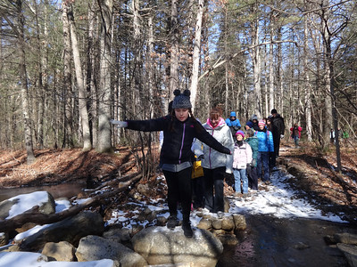 Manning Forest meander in Billerica