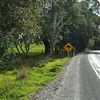 Beware of the kangaroos signage , they are a danger in this area to passing motorists