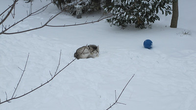 2009 12 26 Blue Denali in the Snow 006