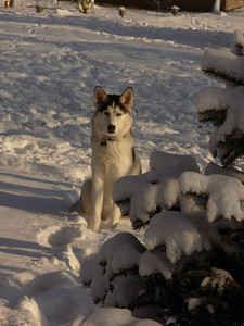 Blue in the snow (source: Brianne G.)
