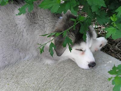 Puppy Blue