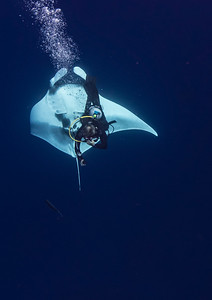 Giant Manta with Diver