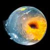 Mantis shrimp egg