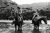 Maoris tuhoe rafraîchissant leurs chevaux en famille dans les eaux de la rivière Whakatane à Ruatoki.<br /> Bay of Plenty/Ile du Nord/Nouvelle-Zélande