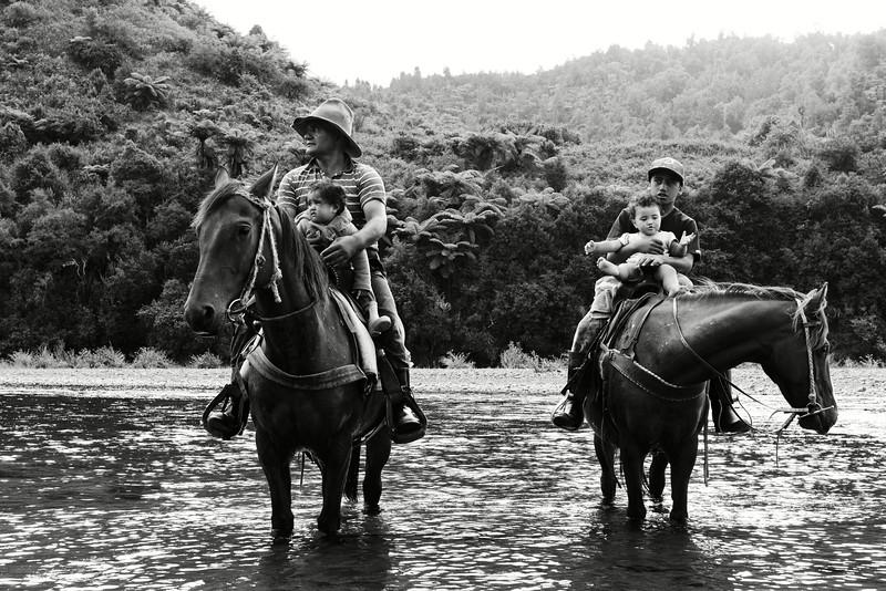 Maoris tuhoe rafraîchissant leurs chevaux en famille dans les eaux de la rivière Whakatane à Ruatoki. Bay of Plenty/Ile du Nord/Nouvelle-Zélande