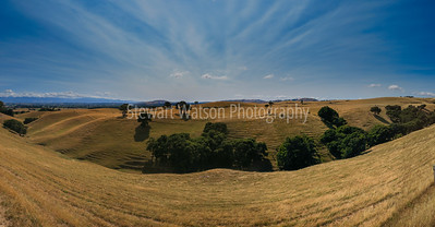 Martinborough countryside
