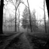 Jenny Gandert, Foggy Lane, Canvas Framed, 24X28,  $240, solo.photographer@gmail.com, 513.899.9255