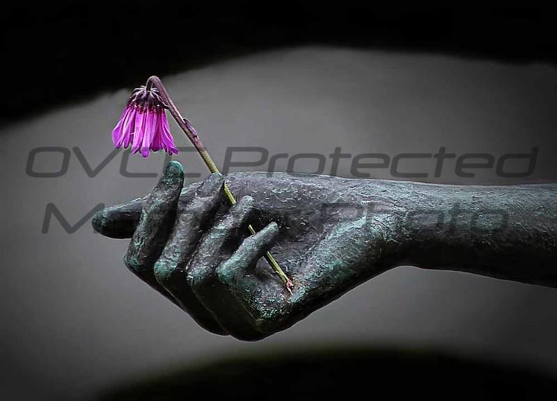 Bobbie Butler, Flower for the Mourning, Digital Photography, 20 x 24, $130, bobbienb@isoc.net, 513-874-3629