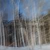 Larry Flinner,Ghostly Trees, Stanout print, 11X14, $110,LarryrF477@Fuse net, 4105887