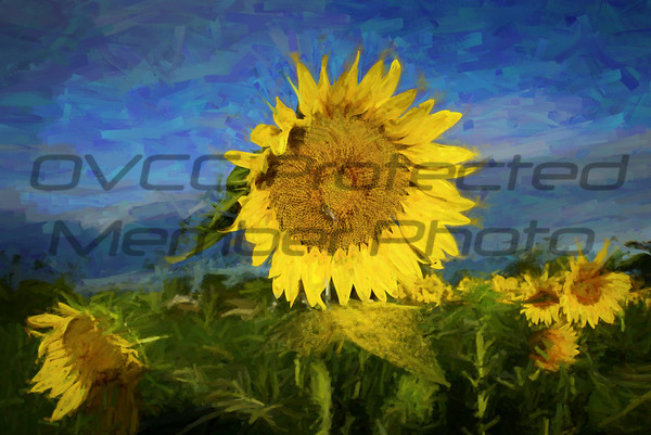 Joe Chunko, Fallen Sunflower Pollen, Photo Printed on Canvas, 22x32, $350, jrchunko@gmail.com, 513 492 7379