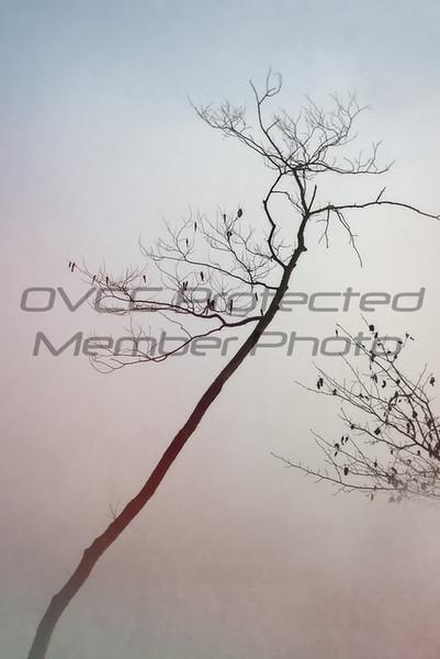 "Joe Chunko, ""Leafless Tree In Morning Fog"", Photo Printed on Rice Paper,20x26, $200.00, jrchunko@gmail.com, 513 492 7379"