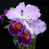 John Butler. Two Purple Orchids, Digital Photo, 20 x 24, $125, Jbutler2@isoc.net, 513-874-524