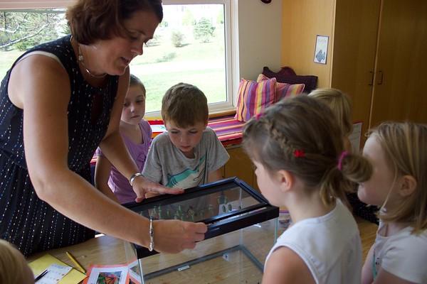 Kindergarten Monarch Project