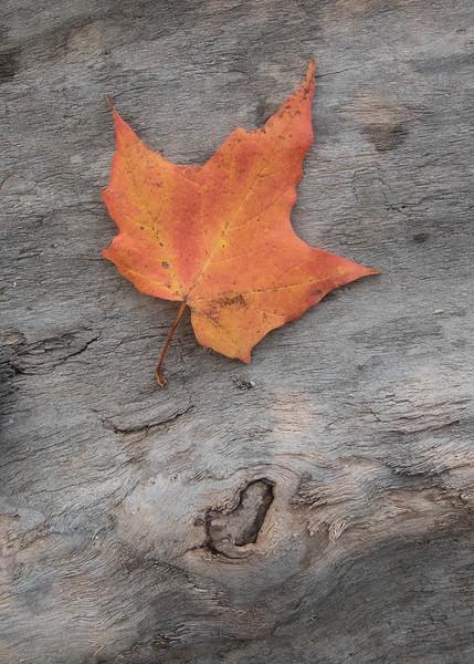 Sticks and Stones - Lake Ontario Driftwood