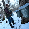 KRISTOPHER RADDER - BRATTLEBORO REFORMER<br /> Jerry Smith, of Deer Ridge Farm, in Guilford, uses a mixture of tubing and buckets to collect sap on Monday, Feb. 26, 2018.