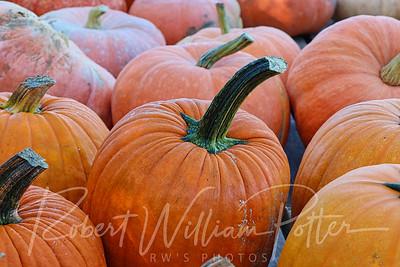 4976-Pumpkins