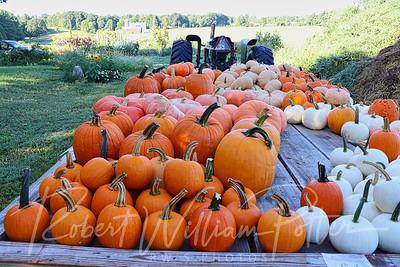 4977-Pumpkins