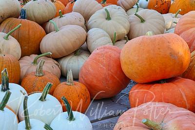 4973-Pumpkins