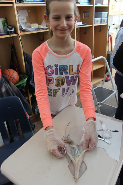 Dissecting Squid in Grade 5