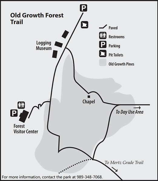 Hartwick Pines State Park (Old Growth Forest Trail)