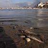 Greenpeace documenta el devastador estado en el que se encuentra el Mar Menor