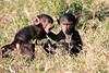 Baboon_Tangulia_Marsh_Mara_Reserve_2018_Kenya_0013