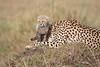 Cheetah_Young_Cub_Mom_Rekero_Mara_2018_Kenya_0030
