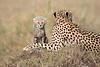 Cheetah_Young_Cub_Mom_Rekero_Mara_2018_Kenya_0012