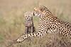 Cheetah_Young_Cub_Mom_Rekero_Mara_2018_Kenya_0008