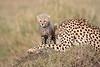 Cheetah_Young_Cub_Mom_Rekero_Mara_2018_Kenya_0021