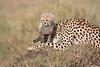 Cheetah_Young_Cub_Mom_Rekero_Mara_2018_Kenya_0029