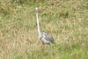 Birds_Eating_Marsh_Tangulia_Mara_Reserve_2018_Kenya_0061
