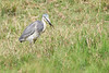 Birds_Eating_Marsh_Tangulia_Mara_Reserve_2018_Kenya_0057