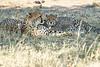 Cheetah_Mara_Reserve_2018_Kenya_0070