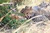 Cheetah_Mara_Reserve_2018_Kenya_0020