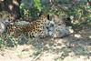 Cheetah_Mara_Reserve_2018_Kenya_0107