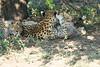 Cheetah_Mara_Reserve_2018_Kenya_0112