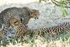 Cheetah_Mara_Reserve_2018_Kenya_0181