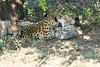 Cheetah_Mara_Reserve_2018_Kenya_0111