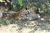 Cheetah_Mara_Reserve_2018_Kenya_0109