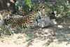 Cheetah_Mara_Reserve_2018_Kenya_0110
