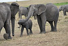 Elephant_Affections_Tangulia_Rekero_Mara_Reserve_2018_Kenya_0062