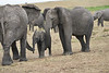 Elephant_Affections_Tangulia_Rekero_Mara_Reserve_2018_Kenya_0067