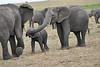 Elephant_Affections_Tangulia_Rekero_Mara_Reserve_2018_Kenya_0064