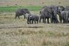 Elephant_Families_Marsh_Tangulia_Mara_Reserve_2018_Kenya_0079