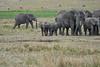 Elephant_Families_Marsh_Tangulia_Mara_Reserve_2018_Kenya_0074
