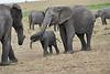 Elephant_Affections_Tangulia_Rekero_Mara_Reserve_2018_Kenya_0060