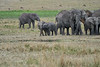Elephant_Families_Marsh_Tangulia_Mara_Reserve_2018_Kenya_0078